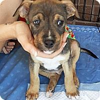 Adopt A Pet :: Provolone - Oakland, CA