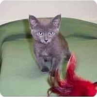 Adopt A Pet :: Betsy - Secaucus, NJ