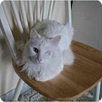 Adopt A Pet :: Sasha - Toronto, ON