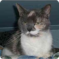 Adopt A Pet :: Scarlet - Lombard, IL