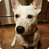 Adopt A Pet :: Oswald - Scottsdale, AZ