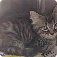 Adopt A Pet :: Curtis - Chattanooga, TN