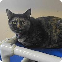 Adopt A Pet :: Freedom - Martinsburg, WV