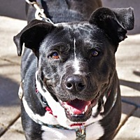 Adopt A Pet :: Janie - Rockville, MD
