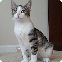 Adopt A Pet :: Sylvester Amigo and Cheeto - Lincolnton, NC