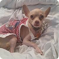 Adopt A Pet :: Tofu - Rancho Santa Fe, CA
