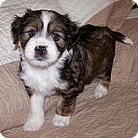 Adopt A Pet :: Katee - La Habra Heights, CA