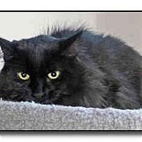 Adopt A Pet :: Amos - Howell, MI