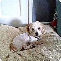 Adopt A Pet :: Sherman - Crystal River, FL