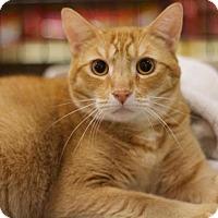 Adopt A Pet :: Bruno Mars - Sacramento, CA