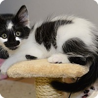 Adopt A Pet :: Princess Belle - Davis, CA