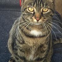 Adopt A Pet :: Jasmine & Rocky - Horsham, PA