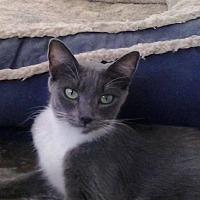 Adopt A Pet :: Jasmin - Lancaster, CA
