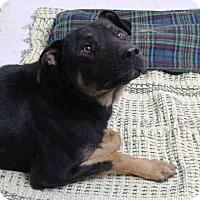 Adopt A Pet :: Rockey - Tracy, CA