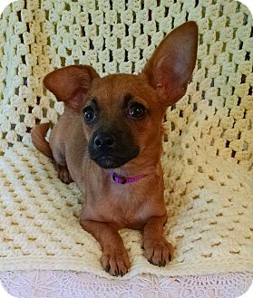 Chihuahua/Pug Mix Puppy for adoption in Palestine, Texas - Emma