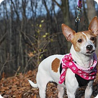 Adopt A Pet :: Lou-Lou- - New Castle, PA