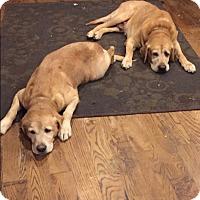 Adopt A Pet :: Duke - Franklinville, NJ
