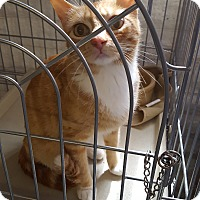 Adopt A Pet :: TATUM - Phoenix, AZ