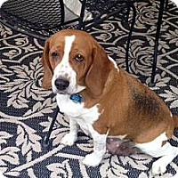 Adopt A Pet :: Natasha - Phoenix, AZ