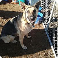 Adopt A Pet :: Sugar - Victorville, CA