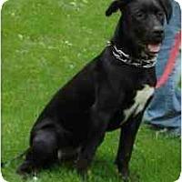 Adopt A Pet :: Chaplin - Rigaud, QC