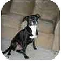 Adopt A Pet :: Amber - Milwaukee, WI