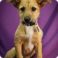 Adopt A Pet :: Skippy - Broomfield, CO