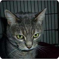 Adopt A Pet :: Addison - Milwaukee, WI
