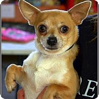 Adopt A Pet :: Snickers - Yuba City, CA