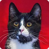 Adopt A Pet :: BowTie - Calgary, AB