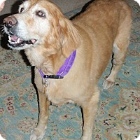 Adopt A Pet :: Lily - Murdock, FL