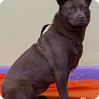 Adopt A Pet :: Cocoa - Evansville, IN