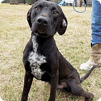 Adopt A Pet :: Mario - St. Francisville, LA