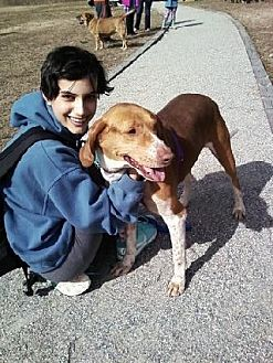 Hound (Unknown Type) Mix Dog for adoption in Midlothian, Virginia - Skipper