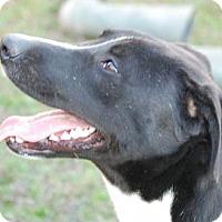 Adopt A Pet :: Twix  Great Dog! Lower Fee! - Locust Fork, AL