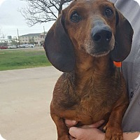 Adopt A Pet :: WALTER - Lubbock, TX
