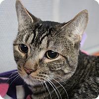 Adopt A Pet :: Journey - Sarasota, FL
