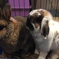 Adopt A Pet :: Patty - Woburn, MA