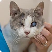 Adopt A Pet :: Comfort (FCID# 04/24/2017 - 57) - Greenville, DE