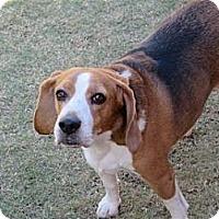 Adopt A Pet :: Ben - Phoenix, AZ