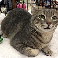 Adopt A Pet :: Gus - Vero Beach, FL