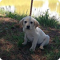 Adopt A Pet :: Dax - Adamsville, TN