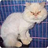 Adopt A Pet :: Sebastian - Columbus, OH