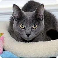 Adopt A Pet :: Tiger Lily - Alexandria, VA