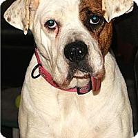 Adopt A Pet :: Callen - Alpharetta, GA