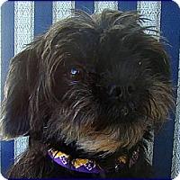 Adopt A Pet :: FRANCINE - ADOPTION PENDING - Sun Prairie, WI