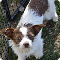 Adopt A Pet :: Jesse - Meridian, ID