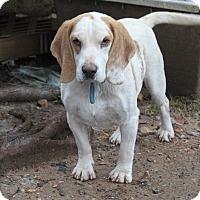 Adopt A Pet :: Lenny - Oakland, AR