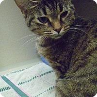 Adopt A Pet :: Sabrina - Hamburg, NY