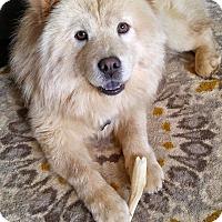 Adopt A Pet :: Molly - Tucker, GA